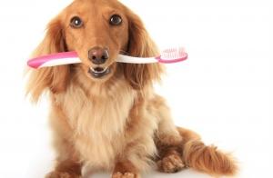 Limpieza bucal para perros