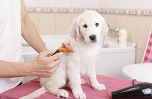 Lavado y corte de pelo para perro