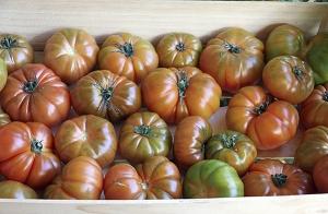 Caja de 5 kg de tomates Raf